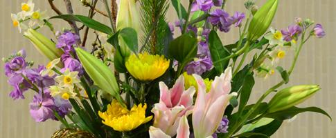 ✿ たった一つの花 ✿